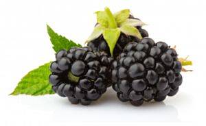 BLACKBERRY SEED OIL-VIRGIN ORGANIC (น้ำมันเมล็ดแบล็คเบอร์รี่ สกัดเย็น เกรดออแกนิค)