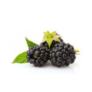 BLACKBERRY SEED OIL - VIRGIN ORGANIC (น้ำมันเมล็ดแบล็คเบอร์รี่ สกัดเย็น เกรดออแกนิค)