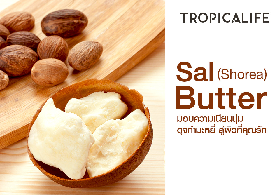 Sal (Shorea) Butter  มอบความเนียนนุ่มดุจกำมะหยี่ สู่ผิวที่คุณรัก