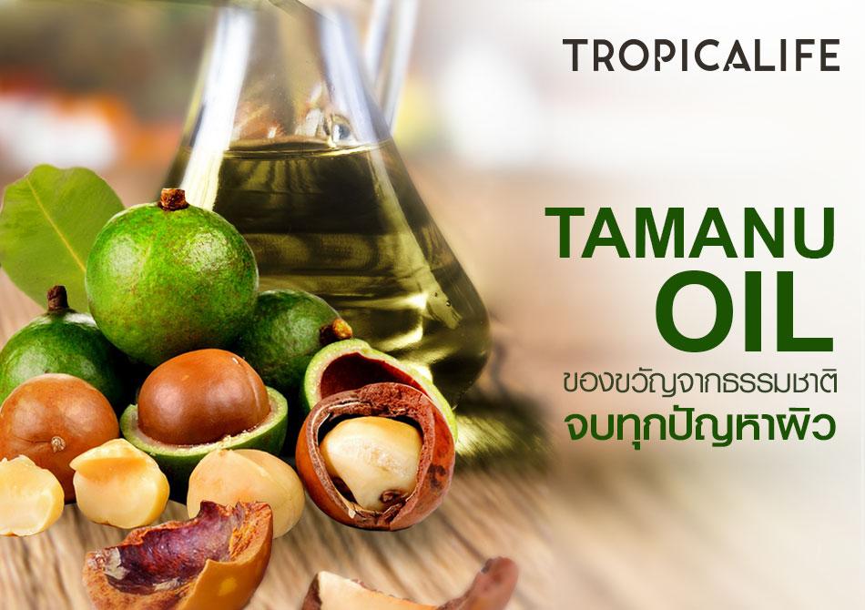 Tamanu Oil (น้ำมันต้นกระทิง)  ของขวัญจากธรรมชาติ จบทุกปัญหาผิว